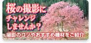桜の撮影にチャレンジしませんか?